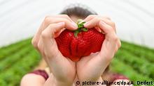 BdT | Bild des Tages mit Deutschlandbezug | Erdbeeren
