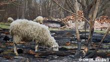 Waldbrände Ukraine Bildergalerie