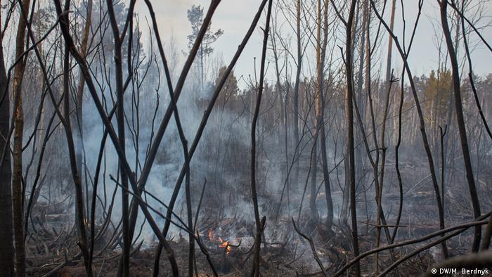 Очаг огня в лесу