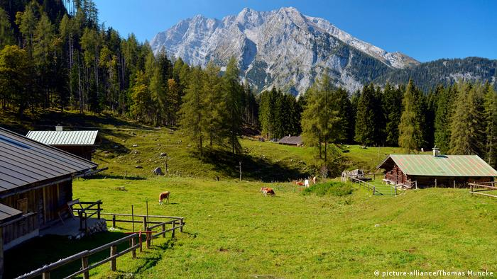 Mountain meadow with chalets and peaks in the background, Bavaria (picture-alliance/Thomas Muncke)