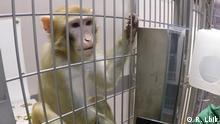 Deutschland Göttingen | Deutsches Primatenzentrum | Affe