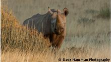 Schwarzes Nashorn