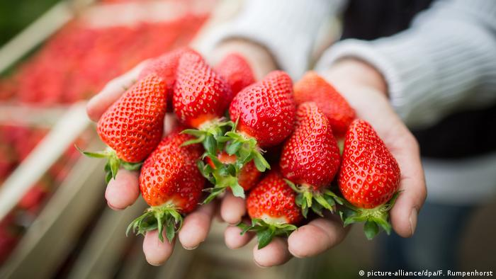 Strawberries (image-alliance / dpa / F. Rumpenhorst)