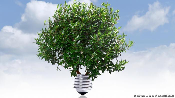 Зеленая энергия: символическая лампочка в виде дерева
