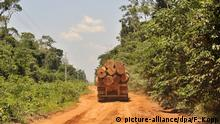 File photo: A truck carrying large logs along a dirt track in a Brazilian rainforest in Mato Grosso. (picture-alliance/dpa/F. Kopp)