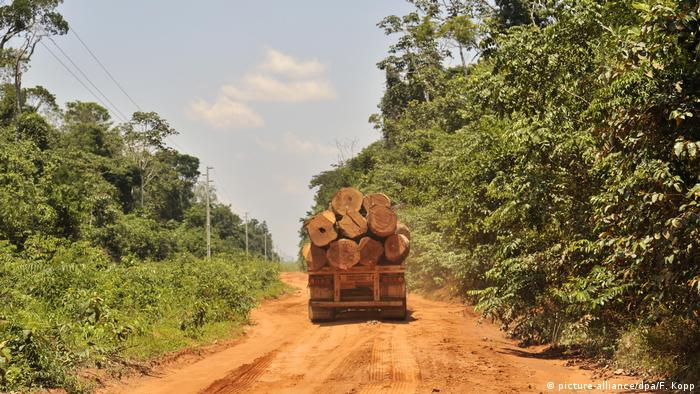 File photo: A truck carrying large logs along a dirt track in a Brazilian rainforest in Mato Grosso.