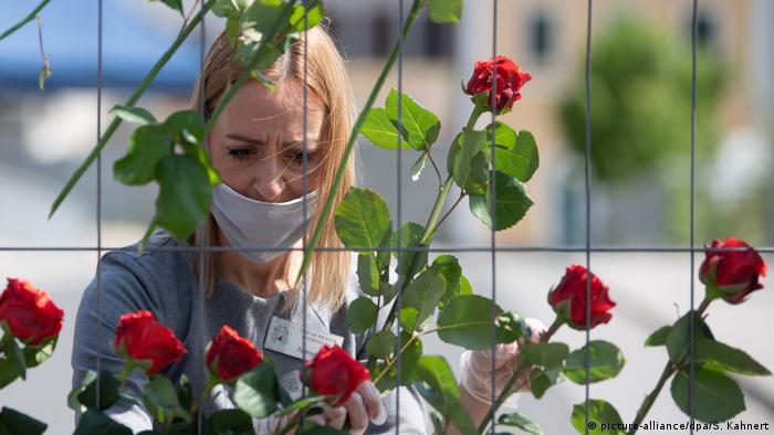 Розы в память о победе во Второй мировой войне