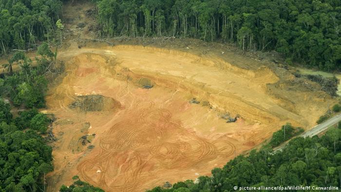 Tala ilegal en la selva amazónica brasileña. (Archivo).