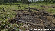 Amazonas Rodung Kahlschlag Regenwald Vernichtung