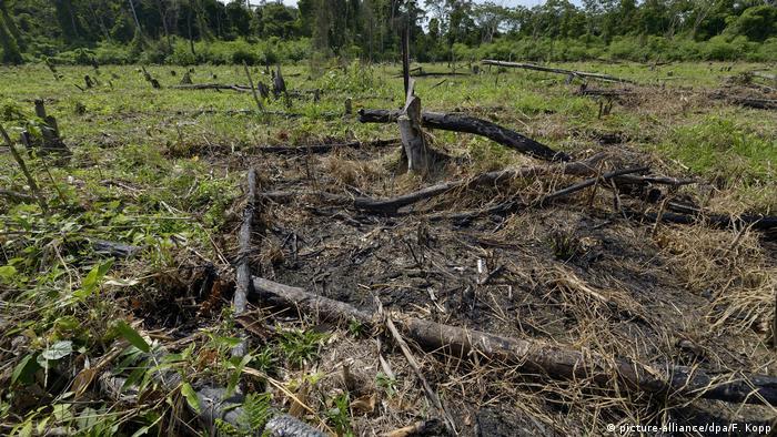 Amazonas Rodung Kahlschlag Regenwald Vernichtung (picture-alliance/dpa/F. Kopp)
