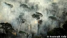 Brasilien Amazonas Regenwald Brandrodung