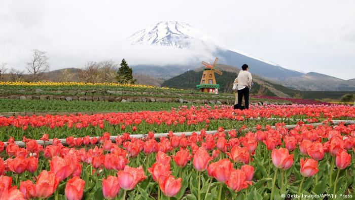 Campo de tulipanes con el trasfondo del monte Fuji, en Japón.