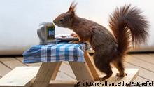 BdT | Bild des Tages | Eichhörnchen-Bierbank