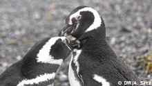 Biologin Andrea Raya Rey erforscht 20 Jahre lang Pinguinkolonien in Feuerland