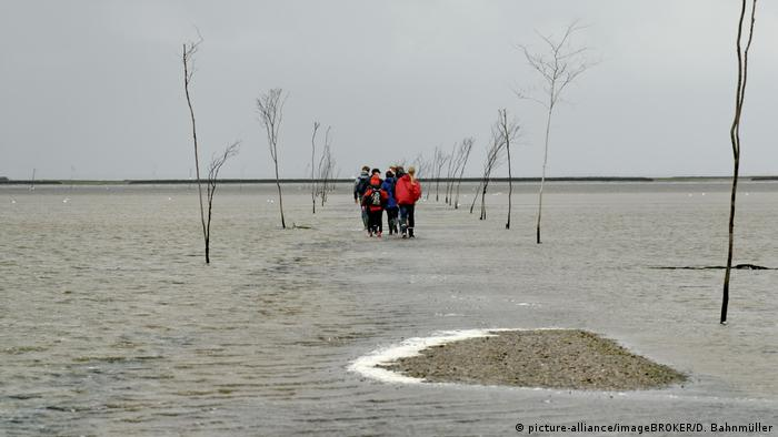 Hiking group on the Wadden Sea mudflats, Jutland, Denmark (picture-alliance/imageBROKER/D. Bahnmüller)