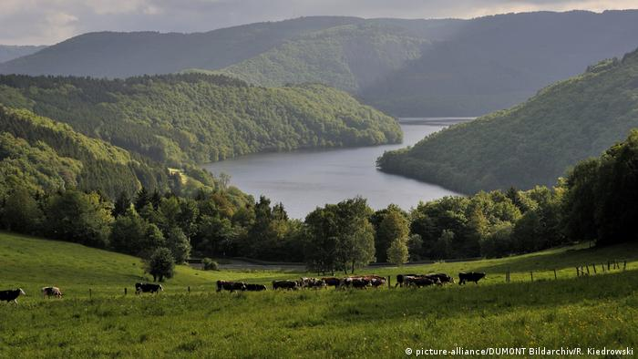 Germany |  View over cow pastures to hills and a lake in the Eifel region