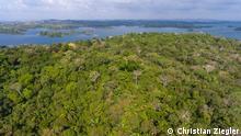 Panama Barro Colorado Island Regenwald Neuer Regenwald nach Landwirtschaft