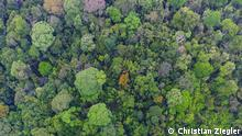 Description: Around 300 tree species grow in 50 hectares of old-growth forest at Barro Colorado Island, Panama. Credit: Christian Ziegler Quelle: German Centre for Integrative Biodiversity Research (iDiv) Halle-Jena-Leipzig