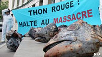 Roter Thunfisch Frankreich Greenpeace Protest