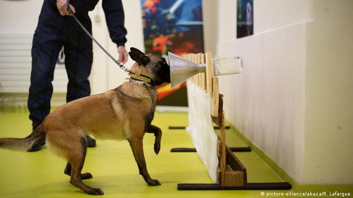 Също и във Франция кучета биват обучавани да реагират на новия коронавирус