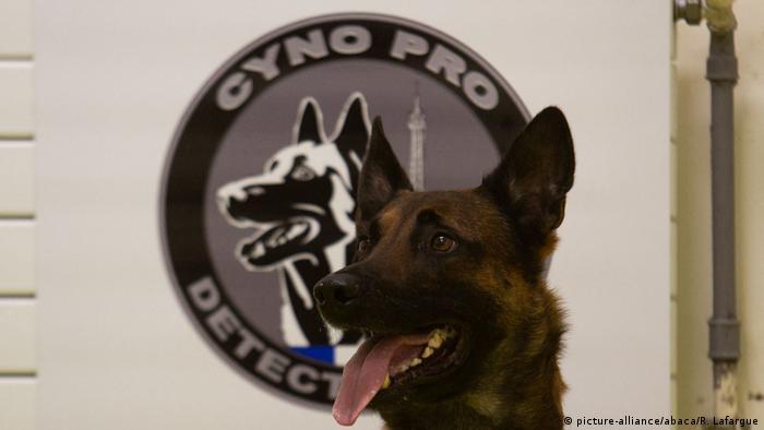 BG Hunde sollen Corona Erkrankung aufspüren (picture-alliance/abaca/R. Lafargue)