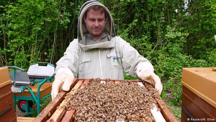 Frankreich Bienen und Imker
