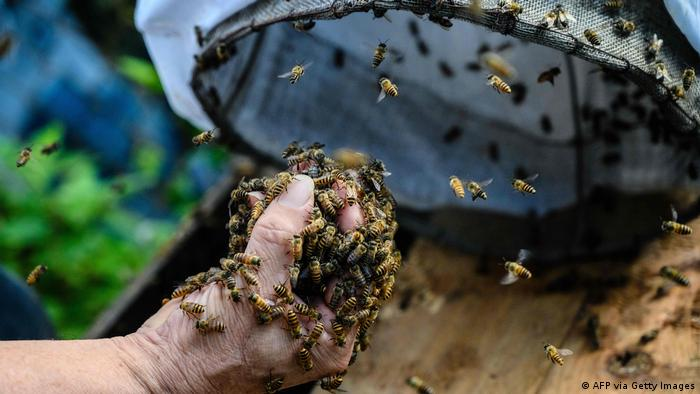 A beekeeper holding bees in Hong Kong (AFP via Getty Images)