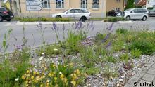 Beitrag pestizidfreie Kommunen |Verkehrsrandflächen