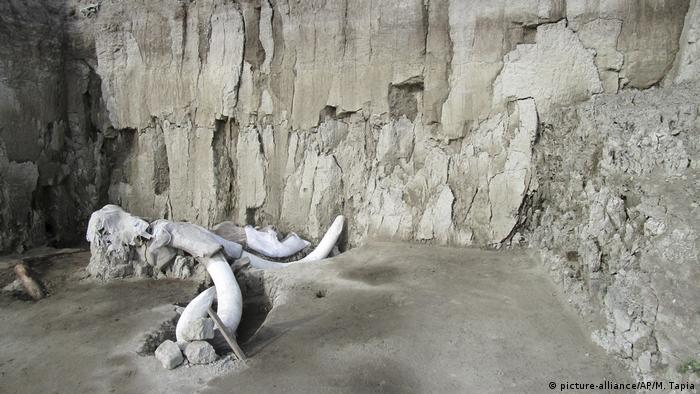 An earlier discovery of mammoth bones at the same site