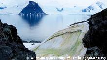 BdTD Antarktis Anchorage Island Bunte Schnee-Algen durch Klimaerwärmung