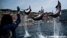 BdTD - Italien Aquarium in Genua