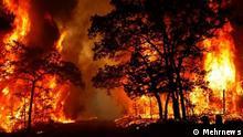 Iran: Waldbrand in Gachsaran
