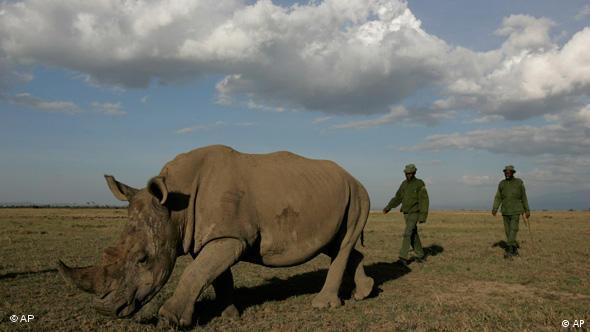 Kenyan rangers protect a white rhino (Photo: AP/Karel Prinsloo)