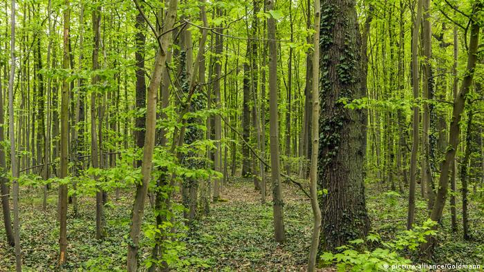 German sayings about the forest