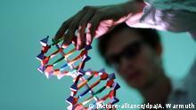 ARCHIV - ILLUSTRATION - Ein Mann betrachtet am 04.05.2011 in Hamburg ein DNA-Modell. (zu dpa «Bioethik-Kommission soll wieder alte Vorbildrolle einnehmen» vom 09.09.2017) Foto: Angelika Warmuth/dpa +++(c) dpa - Bildfunk+++ | Verwendung weltweit
