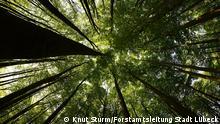 Lübecker Modell der Waldbewirtschaftung |Lübecker Wald