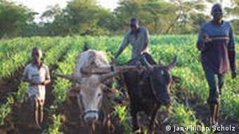 An African farm with four young men in the field