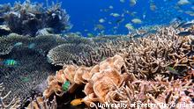 Australien | Great Barrier Reef