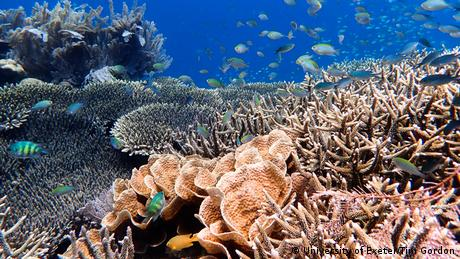 Coral and fish at the Great Barrier Reef off coast of Australia