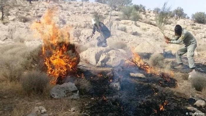 مقامات محلی از مردم برای مهار آتش سوزی درخواست کمک کردند