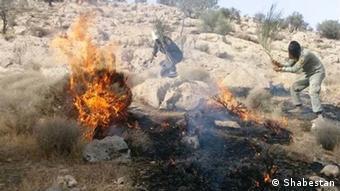 فعالان زیستمحیطی در مهار آتش کمک میکنند