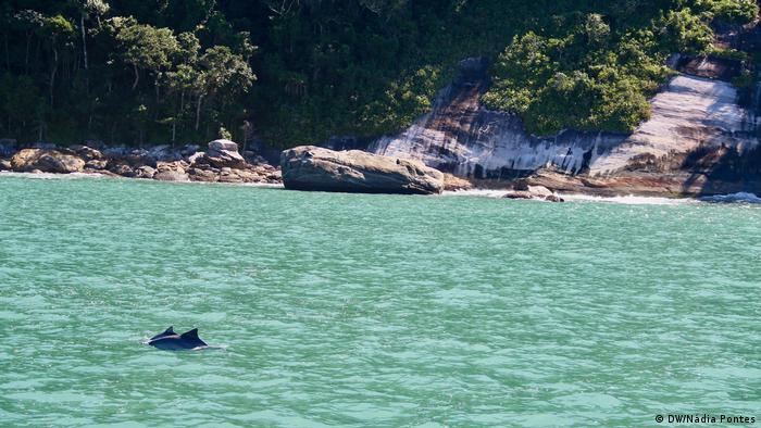 Golfinhos nas região de Ubatuba