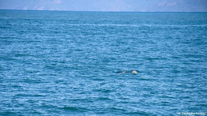 Golfinhos em Ubatuba