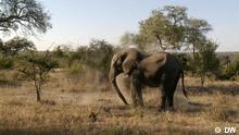 Bio Brasilien / Wildreservat / DW Elefant Global 3000 ©