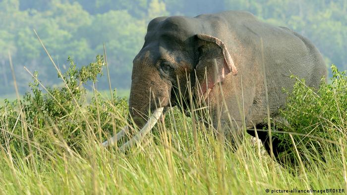 India: Suspect arrested after elephant dies from eating explosives
