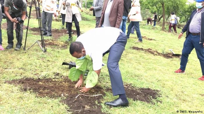 Ethiopian Prime Minister Abiy Ahmed planting a tree to launch a campaign for reforestation
