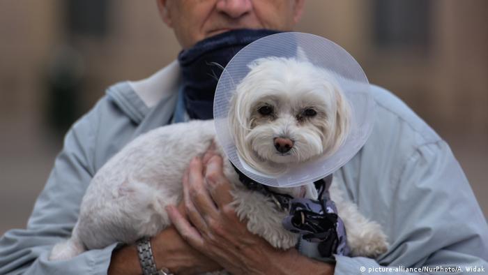 Собака с елизаветинским воротником