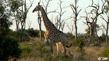 Global Ideas Südafrika Mala Mala Game Reserve