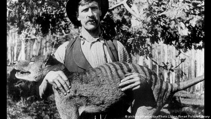 This 1925 photo shows a hunter with the now extinct Tasmanian tiger