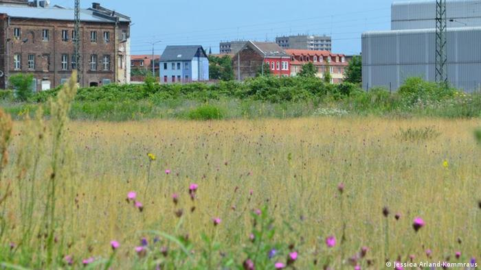 A wild meadow in a former industrial area of Dessau